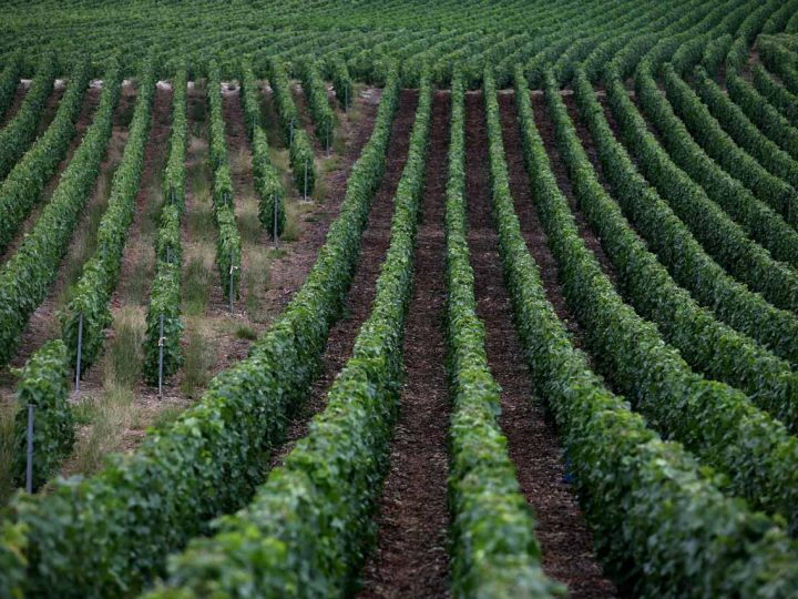 ITALIAN WINE: A NEVER-ENDING ADVENTURE THROUGHOUT THE COUNTRY