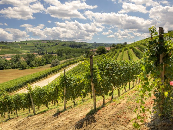 ITALY, THE MOST BIODIVERSE WINE COUNTRY OF THEM ALL
