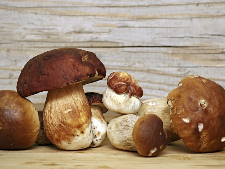 TYPICAL AUTUMN RECIPE: RISOTTO WITH PORCINI MUSHROOMS