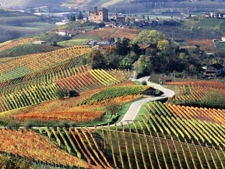 THE LANGHE IN PIEDMONT AND ITS WINES!