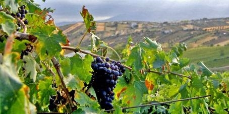 MONTEPULCIANO D'ABRUZZO. AN ICON OF ITALIAN WINE