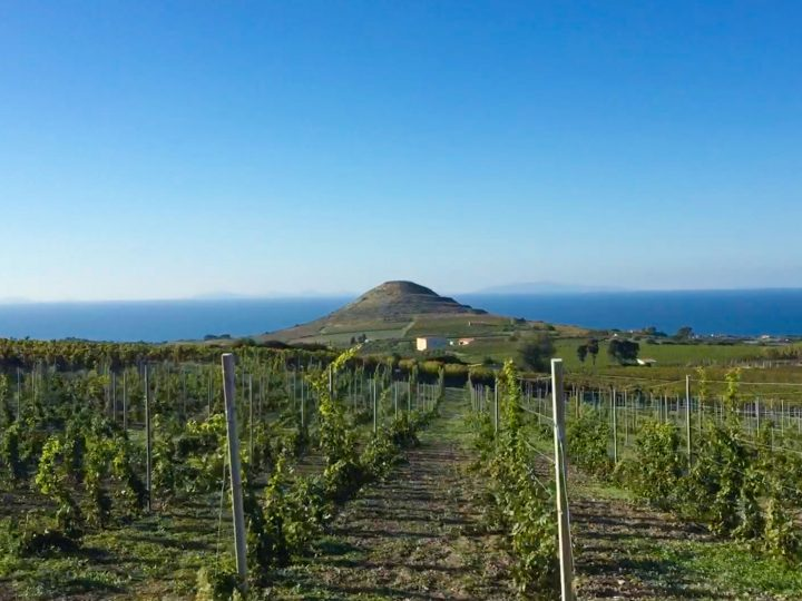 WINE AND ENOGASTRONOMY OF SARDINIA