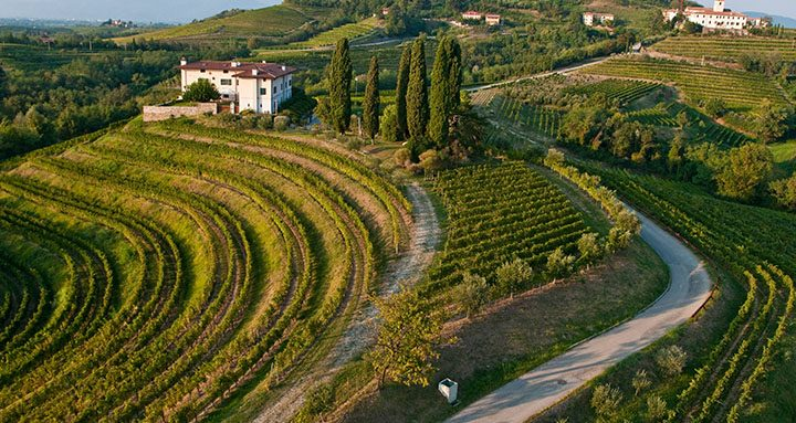 FRIULI VENEZIA GIULIA: THE WINE REGION!