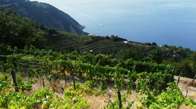 THE HISTORY OF VITICULTURE AND THE ENOGASTRONOMY OF LIGURIA